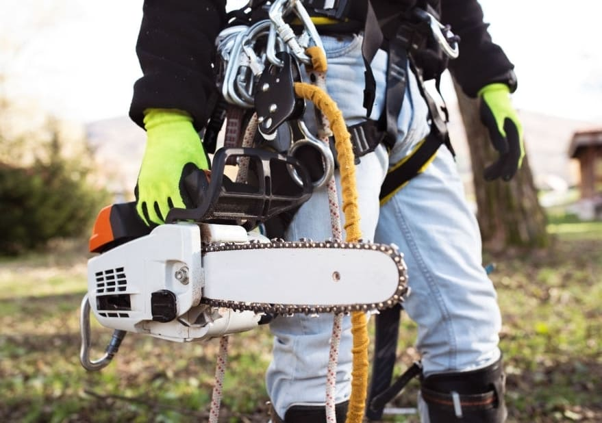 Curious To Know What Is there in Arborist's Toolbox?