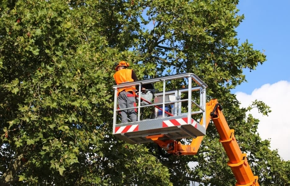 How To Take Better Care Of Your Trees