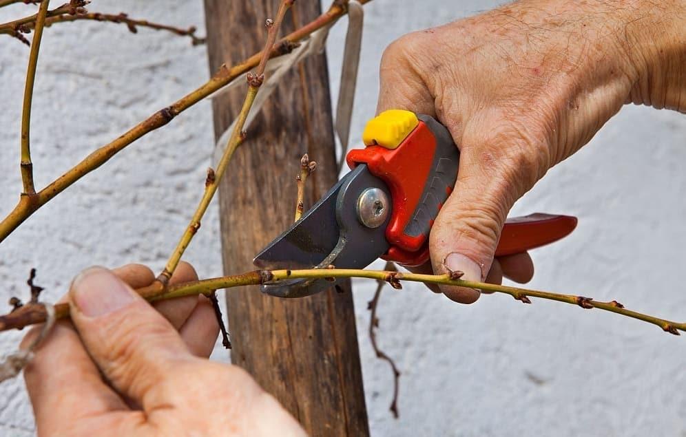 Winter Tree Care Guide
